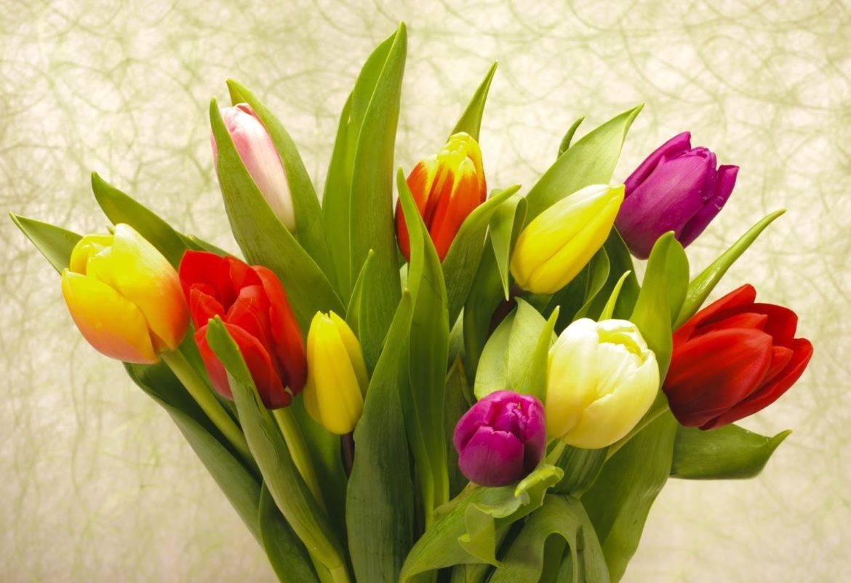 A List Of Spring Flowers Zerritta Flowers